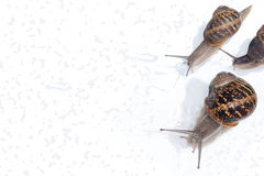 Escargots Photos libres de droits