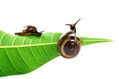 Escargots Image libre de droits