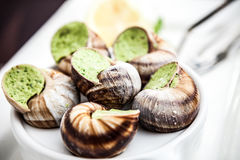 Escargots Royalty Free Stock Photos