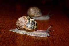 Escargots Images stock