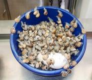 escargots 免版税库存图片
