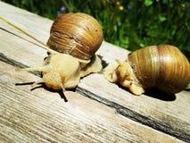 escargots Photographie stock libre de droits