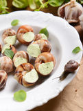 Escargots avec du beurre d'ail Photos stock