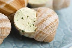Escargots avec du beurre d'ail Images stock