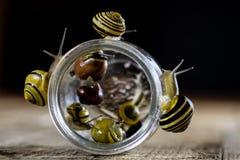 Escargots colorés grands et petits dans un pot en verre Table en bois Images libres de droits