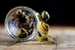 Escargots colorés grands et petits dans un pot en verre Table en bois Image stock