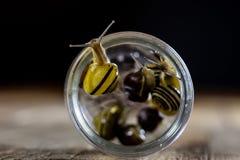 Escargots colorés grands et petits dans un pot en verre Table en bois Photographie stock
