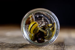 Escargots colorés grands et petits dans un pot en verre Table en bois Photo stock