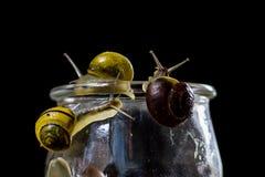 Escargots colorés grands et petits dans un pot en verre Table en bois Photos libres de droits