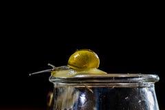 Escargots colorés grands et petits dans un pot en verre Table en bois Images stock
