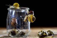Escargots colorés grands et petits dans un pot en verre Table en bois Photo libre de droits
