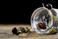 Escargots colorés grands et petits dans un pot en verre Table en bois Photos stock