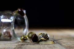Escargots colorés grands et petits dans un pot en verre Table en bois Image libre de droits
