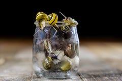 Escargots colorés grands et petits dans un pot en verre Table en bois Photographie stock libre de droits