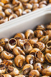 Escargots cuits Photo libre de droits
