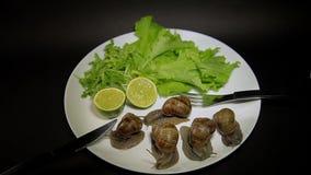 Escargots d'un plat avec des verts clips vidéos