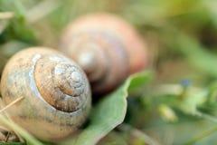 Escargots dans l'herbe Photographie stock libre de droits