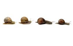 Escargots dans une ligne Photographie stock libre de droits
