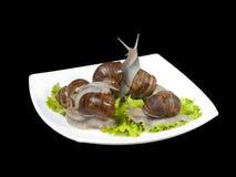 Escargots dans une plaque blanche Image stock