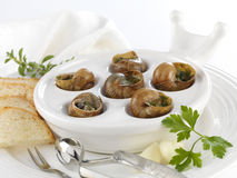 Escargots de Bourgogne Photo libre de droits