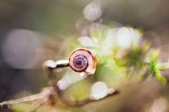 Escargots de Chambre, allumés par lumière du soleil Image stock