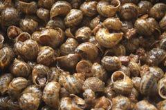 Escargots de cordon en sauce, gastronomie Images libres de droits