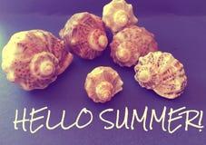 Escargots de mer avec un texte Image stock