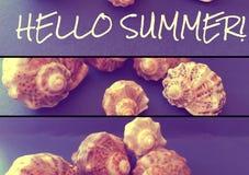 Escargots de mer avec un texte Photographie stock libre de droits