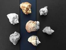 Escargots de mer en noir et blanc Image stock