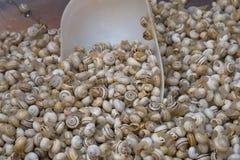 Escargots de mer sur une stalle du marché Photo libre de droits