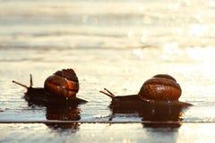 escargots deux Photos libres de droits