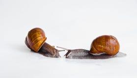 escargots deux Photo libre de droits