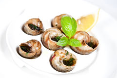 Escargots Royalty Free Stock Image