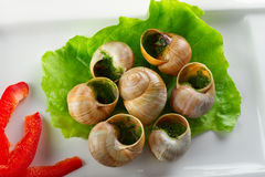 Escargots en beurre d'ail de la plaque Photo stock