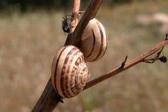 Escargots et un ami Photos libres de droits