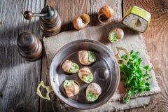 Escargots faits maison avec du beurre d'ail Photographie stock libre de droits