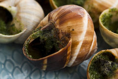 Escargots with garlic butter Royalty Free Stock Images