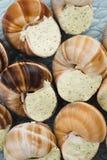 Escargots with garlic butter Stock Photos