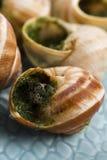 Escargots with garlic butter Stock Photo