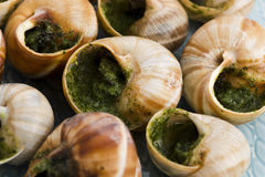 Escargots with garlic butter Stock Images