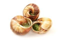Escargots a la Bourguignonne Royalty Free Stock Image