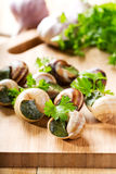 Escargots with parsley Royalty Free Stock Photos
