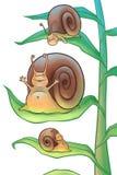 Escargots pendant le matin Photos libres de droits