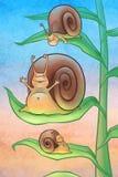 Escargots pendant le matin Photographie stock