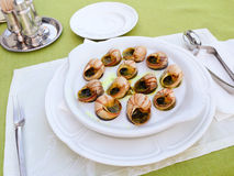 Escargots on the plate Stock Photography