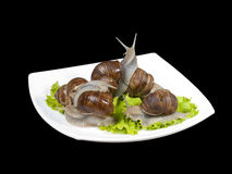 escargots plate white Fotografering för Bildbyråer