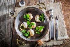 Escargots rôtis avec du beurre d'ail Images stock