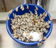 Escargots. Snails food for Royalty Free Stock Image