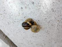 Escargots somnolents Image libre de droits