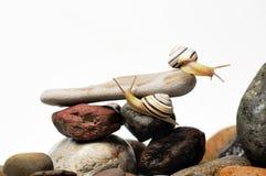 Escargots sur des roches Photos stock